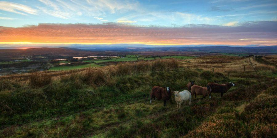 Top5 des lieux à voir lors d'un voyage Irlande